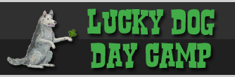 Lucky Dog Day Camp